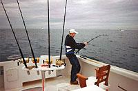 Deep sea fishing gulf shores deep sea fishing orange beach for Alabama fishing regulations